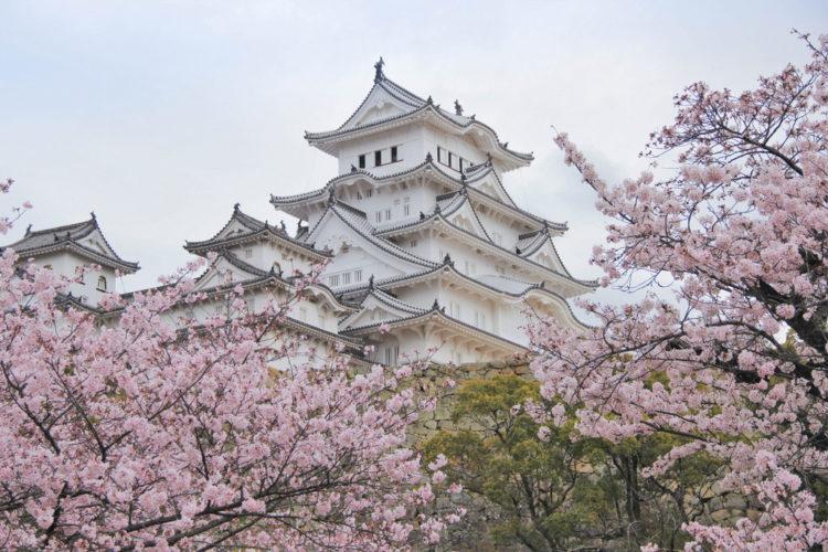 admirer la floraison des cerisiers en chine